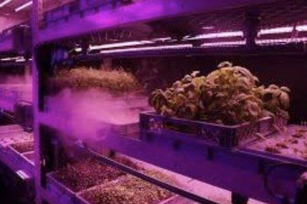 کشت گیاهان بدون خاک,اخبار علمی,خبرهای علمی,طبیعت و محیط زیست