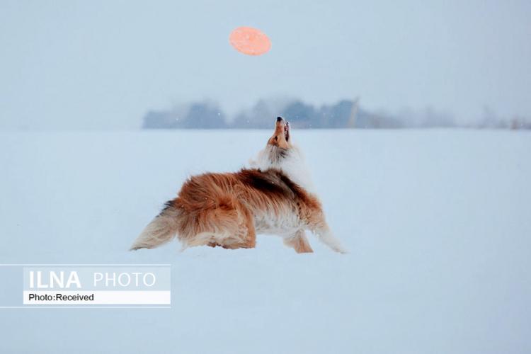 تصاویر برف بازی حیوانات,عکس های برف بازیِ حیوانات,تصاویرانواع حیوانات