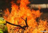 آتش سوزی در استرالیا,اخبار علمی,خبرهای علمی,طبیعت و محیط زیست