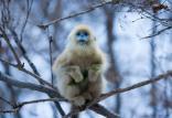 حیوانات عجیب,اخبار جالب,خبرهای جالب,خواندنی ها و دیدنی ها