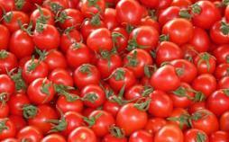 گوجهفرنگی,اخبار اقتصادی,خبرهای اقتصادی,کشت و دام و صنعت