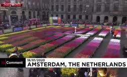 فیلم/ روز ملی لاله در هلند