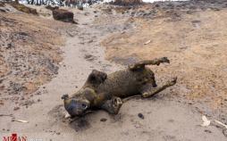 تصاویر انقراض کانگوروها پس از آتش سوزی استرالیا,عکس های انقراض کانگوروها پس از آتش سوزی استرالیا,تصاویر آتشسوزی جنگلهای استرالیا