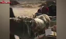فیلم/ اعتراض جالب به گرانی بنزین و آلودگی هوا در اصفهان