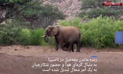 فیلم/ بچه فیلی که زنده ماند؛ «معجزه کریسمس» در نامیبیا