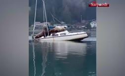 فیلم/ قایق سواری دو شیر دریایی