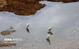 تصاویر زاینده رود,عکس های جاری شدن آب در زاینده رود,تصاویر سی و سه پل اصفهان