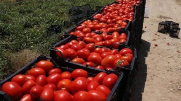 جدیدترین قیمت گوجهفرنگی,اخبار اقتصادی,خبرهای اقتصادی,کشت و دام و صنعت