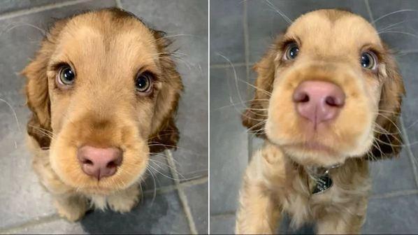 سگی با چشمان خیرهکننده,اخبار جالب,خبرهای جالب,خواندنی ها و دیدنی ها