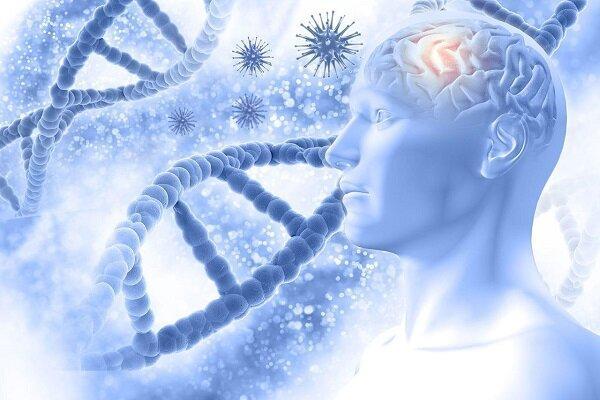 محافظت مغز در مقابل آلزایمر با انجام وزنه برداری