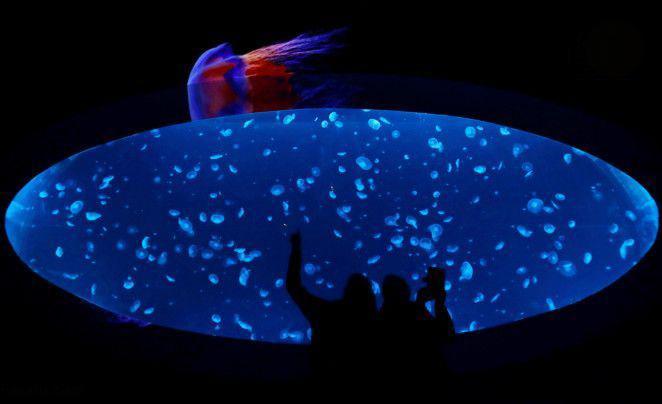 تصاویر بزرگترین آکواریوم عروس دریایی,عکس های بزرگترین آکواریوم عروس دریایی,تصاویر آکواریوم عروس دریایی در پایتخت جمهوری چک