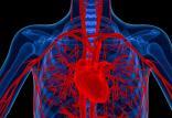پیر شدن رگ های خونی در زنان,اخبار پزشکی,خبرهای پزشکی,تازه های پزشکی