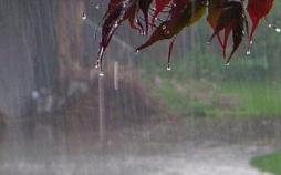 تاثیرات بارندگی در فصول مرطوب,اخبار علمی,خبرهای علمی,طبیعت و محیط زیست
