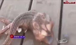 فیلم/ جانور عجیبی که ماهیگیر در دریا صید کرد!