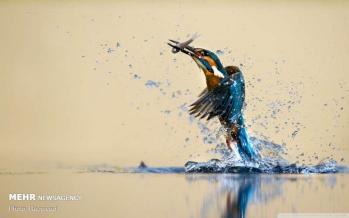 تصاویر جالب از حیوانات در حال حرکت,عکس های جالب از حیوانات در حال حرکت,تصاویر انواع حیوانات
