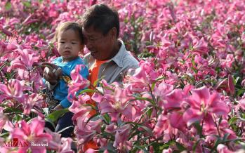تصاویر جشنواره بهار هنگ کنگ,عکس های جشنواره بهار هنگ کنگ,تصاویر خرید گل توسط مردم هنگ کنگ