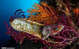 تصاویر مسابقه عکاسی زیر آب سال ۲۰۲۰,عکس های مسابقه عکاسی زیر آب سال ۲۰۲۰,تصاویر برندگان مسابقه عکاسی زیر آب