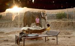 تصاویر فیلها در هند,عکس های فیلها در هند,تصاویر جاذبه های گردشگری هند