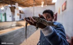 تصاویر نگهداری تمساح در خانه,عکس های خانواده های روستایی در مصر,تصاویر نگهداری از تمساح در خانه