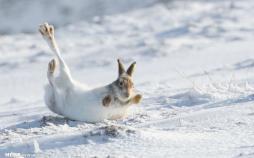 تصاویر مسابقه عکاسی حیات وحش ۲۰۲۰,عکس های برتر از طبیعت,تصاویر دیدنی از حیات وحش