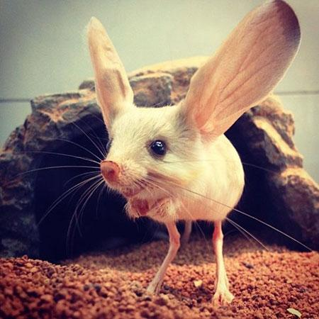 انواع حیوانات عجیب,اخبار جالب,خبرهای جالب,خواندنی ها و دیدنی ها