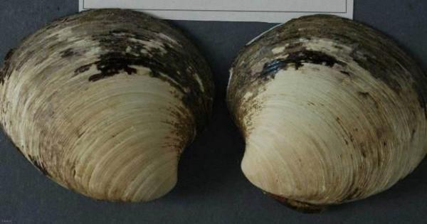جانداران دریایی,اخبار جالب,خبرهای جالب,خواندنی ها و دیدنی ها