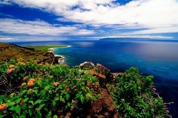 جزیره نیهاو,اخبار جالب,خبرهای جالب,خواندنی ها و دیدنی ها