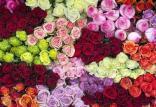 قیمت شاخهای گل در روز پدر,اخبار اقتصادی,خبرهای اقتصادی,اصناف و قیمت