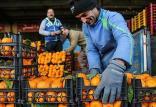 جدیدترین قیمت میوه در آستانه عید 99,اخبار اقتصادی,خبرهای اقتصادی,کشت و دام و صنعت