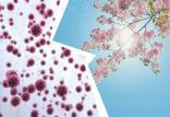 تفاوت بیماری کووید-19 و آلرژی فصلی,اخبار پزشکی,خبرهای پزشکی,مشاوره پزشکی