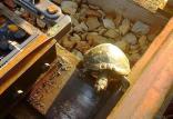 لاکپشتها,اخبار جالب,خبرهای جالب,خواندنی ها و دیدنی ها