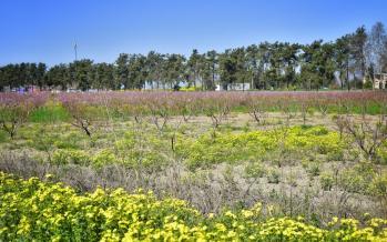 تصاویر فرش رنگین بهار در طبیعت گلستان,عکس های طبیعت گلستان,تصاویر شکوفههای بهاری