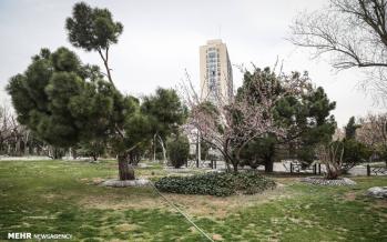 تصاویر شکوفه های بهاری در تهران,عکس های شکوفه های بهاری در تهران,تصاویر فصل بهار