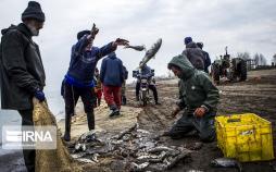 تصاویر صید ماهیان استخوانی,عکس های صیادان در استان گیلان,تصاویر دریای خرز