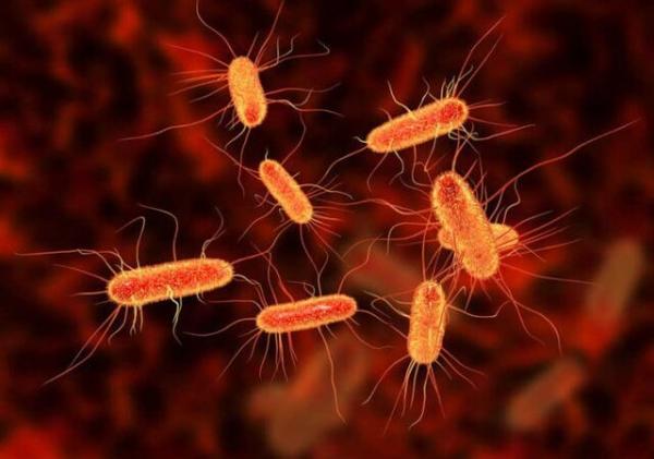 نقش نانوذرات در کشتن باکتریهای مضر,اخبار پزشکی,خبرهای پزشکی,تازه های پزشکی
