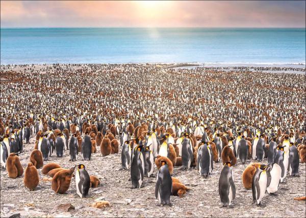 سفری شگفتانگیز به منطقه جنوبگان؛دورافتادهترین قاره دنیا