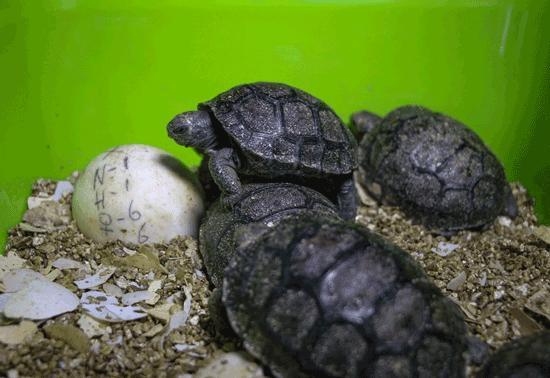 لاکپشت قهرمان,اخبار جالب,خبرهای جالب,خواندنی ها و دیدنی ها