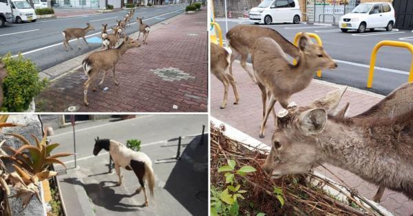 بازگشت حیوانات به شهرها پس از قرنطینه انسان ها,اخبار جالب,خبرهای جالب,خواندنی ها و دیدنی ها