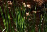 رشد گیاهان,اخبار علمی,خبرهای علمی,طبیعت و محیط زیست