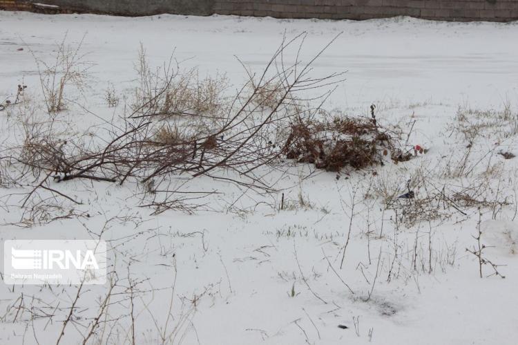 تصاویر برف در خلخال,عکس های شرایط جوی خلخال,تصاویر بارش برف