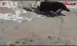 فیلم/ حمله «گرازها» به شهر «میناب»