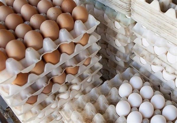 قیمت مرغ و تخم مرغ چند؟,اخبار اقتصادی,خبرهای اقتصادی,کشت و دام و صنعت