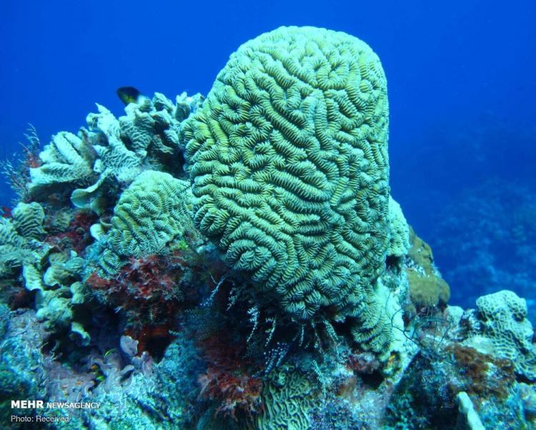 تصاویر صخرههای شگفت انگیز مرجانی جهان,عکس های صخره های مرجانی,تصاویری جذاب از صخره ها در اقیانوس