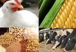 قیمت خوراک دام,اخبار اقتصادی,خبرهای اقتصادی,کشت و دام و صنعت