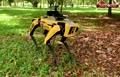 فیلم/ سگ روباتی، مامور گشت فاصله گذاری اجتماعی