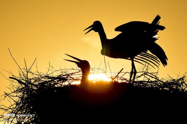 تصاویر صحنه هایی زیبا از طلوع و غروب خورشید,عکس های غروب آفتاب,تصاویر طلوع آفتاب