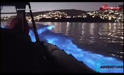 فیلم/ صحنه شنای نورانی دلفینها در یکی از سواحل کالیفرنیا