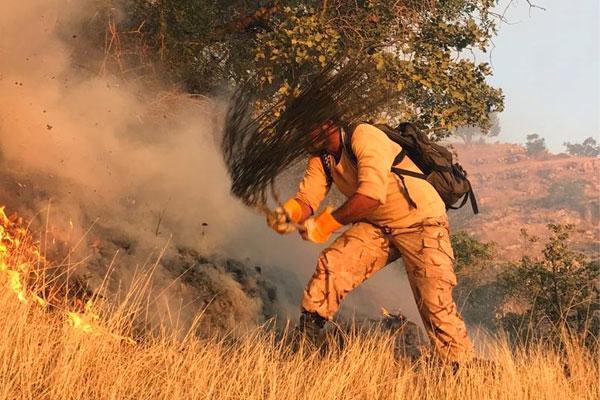 آتش سوزی در جنگل ها,اخبار اجتماعی,خبرهای اجتماعی,محیط زیست