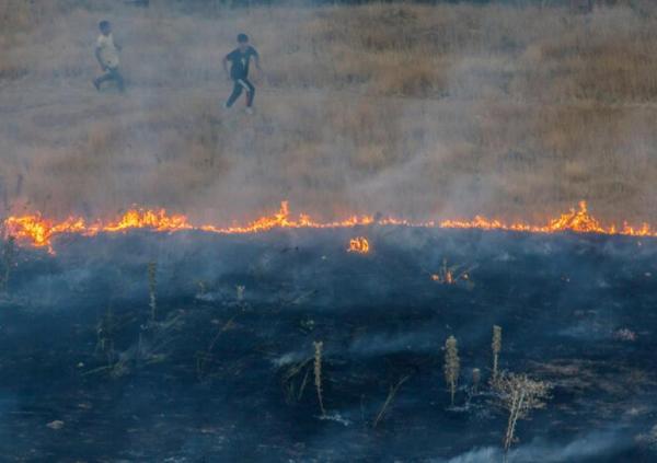 آتش سوزی جنگل ها در ایران,اخبار اجتماعی,خبرهای اجتماعی,محیط زیست