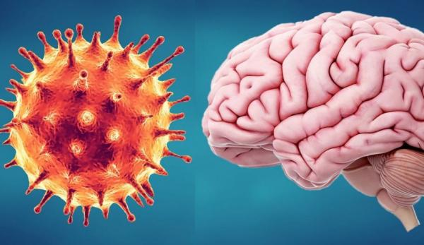 تاثیر ویروس کرونا بر سیستم عصبی مرکزی,اخبار پزشکی,خبرهای پزشکی,تازه های پزشکی